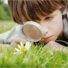 Boy Searching Flowers in grass - Blogger Seo meta description keywords