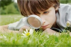 Boy Searching Flowers in grass - Blogger Seo meta description keywords